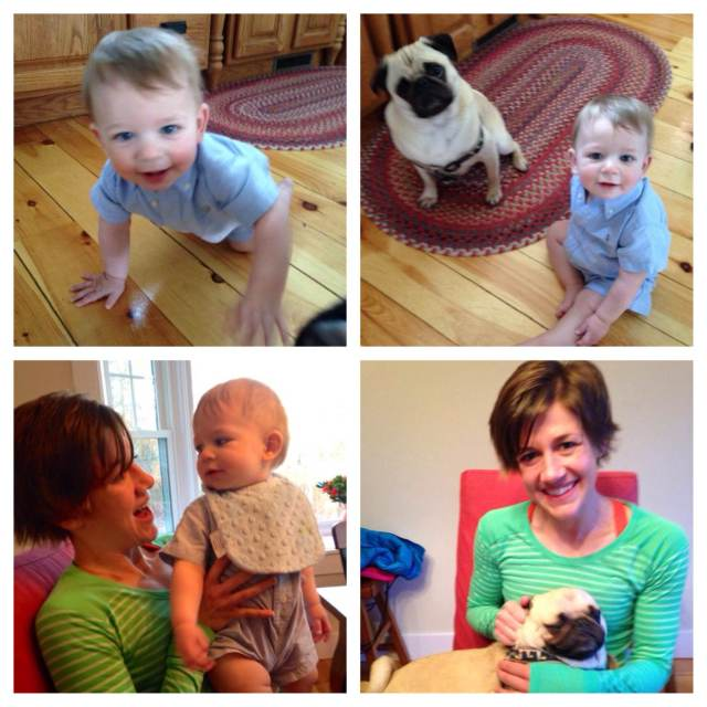 BABIES AND PUGS!!!